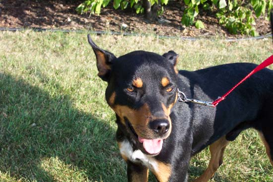 Click here to see Buddy, 105816