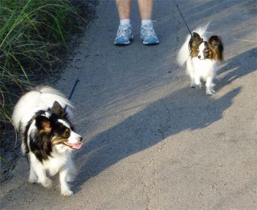 Maxxie taking the lead and Sophie watching Maxxie