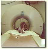 Yes .. even pets may need a CT scan!