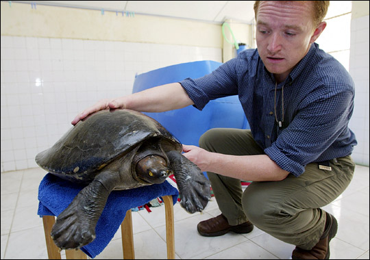 It is very lucky that thanks to the microchip implanted in its right leg, the turtle has been saved.