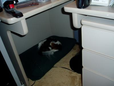 Sophie sleeping on a pillow under my side table