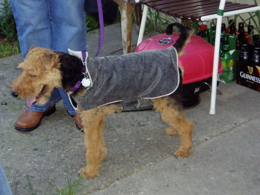 Dog Fashion Show.JPG