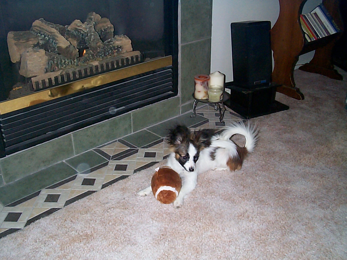 December 2002 - That's my football toy