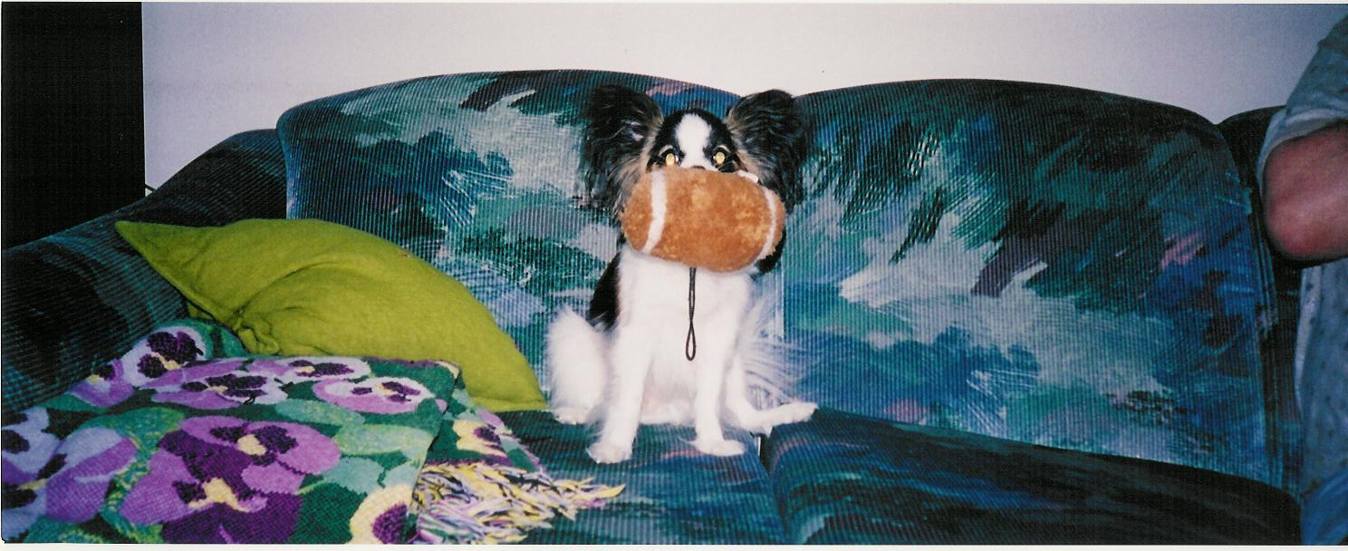 June 2003 - Sophie on the couch with her Football-Toy
