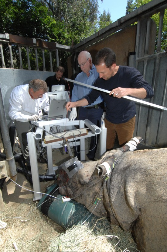 L.A. Zoo Announces Successful Cancer Treatment of Rhinoceros with Electronic Brachytherapy:     Randa, an Indian rhinoceros at the Los Angeles Zoo, receives treatment for skin cancer under the horn with a breakthrough cancer treatment platform designed by Xoft. Inc.